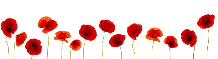 Photo sur Aluminium Poppy Coquelicots sur fond blanc pour bannière