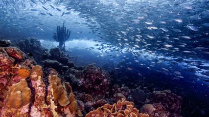 Bait ball in coral reef of Caribbean Sea around Curacao at dive site Playa Grandi Wall mural