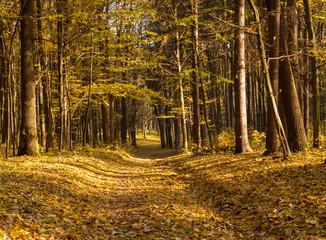 Wall Mural - Pathway through the autumn forest