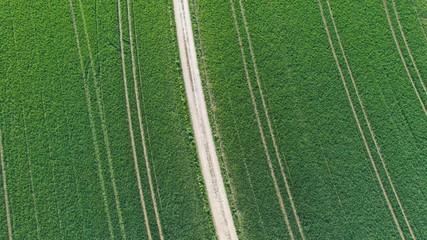 Weg im Feld