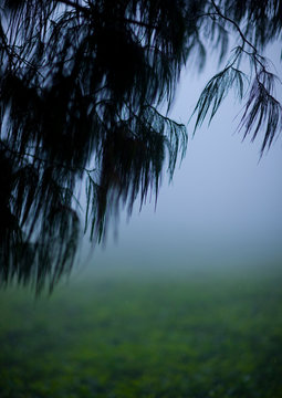 Tea Plantations In Gisakura Village, Rwanda