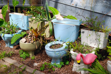 old toilet bowls used as flower pots