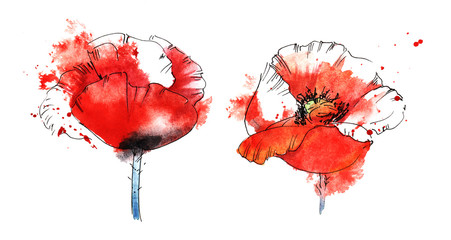 two red poppy on a white background in a spray of scarlet paint. Hand drawn watercolor illustration.