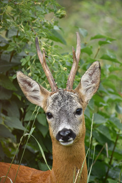 A deers perfect profile pic