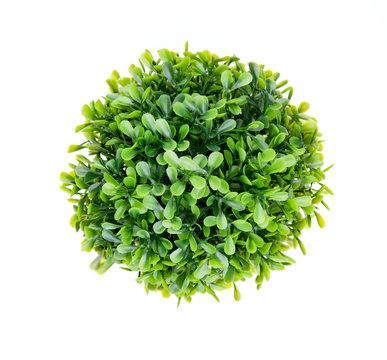 Green bush on white