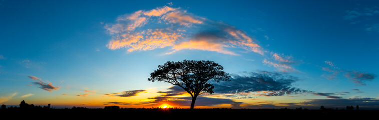 Panorama silhouette tree in africa with sunset.Tree silhouetted against a setting sun. Wall mural