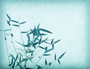Fototapete - Silhouette of branches of a bamboo on old paper background