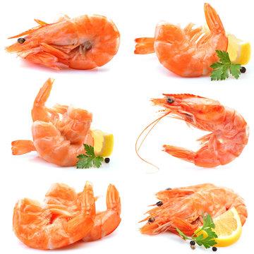 Fresh shrimps on white background