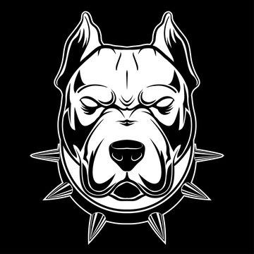 pitbull_1