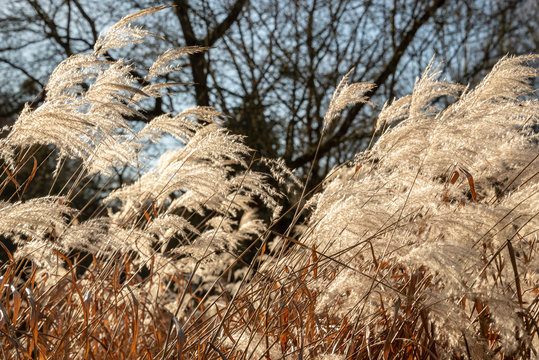 Field of weed grasses in the sun