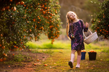 Little happy kid picking orange fresh organic  fruits on a farm