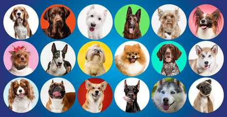 Wall Mural - Young dogs are posing. Cute doggies or pets are looking happy isolated on colorful or gradient background. Studio photoshots. Creative collage of different breeds of dogs. Flyer for your ad.