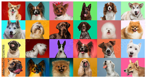 Wall mural Young dogs are posing. Cute doggies or pets are looking happy isolated on colorful or gradient background. Studio photoshots. Creative collage of different breeds of dogs. Flyer for your ad.