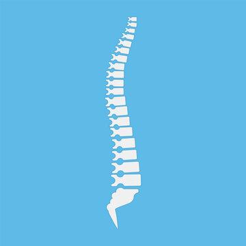 Backbone icon, human spine template. Vector illustration