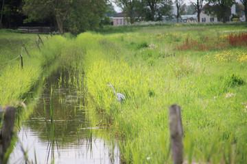 Farmland and meadows in the Zuidplaspolder at Nieuwerkerk aan den IJssel, one of the lowest parts of europ with 21 ft below sea level