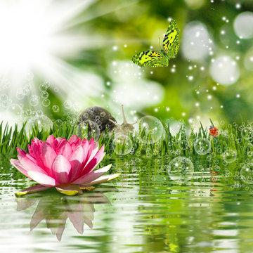 image of a tree, lotus, grass, butterfly, snail on water background