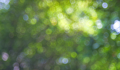 Natural green blurred background. Abstract background with bokeh defocused lights. Royalty high-quality free stock image of bokeh light from the sun through the leaves with copyspace for text design