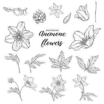 vector set of floral floral patterns