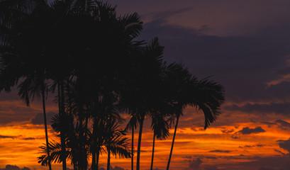 Black palm trees silhouettes
