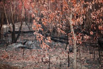 Burnt rainforest, photo background
