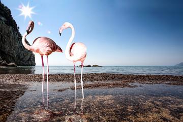 Flamingo bird and summer time