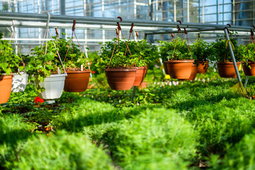 Seedlings and flowers in a botanical greenhouse.
