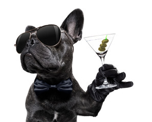 Stores photo Chien de Crazy drunk dog drinking a cocktail