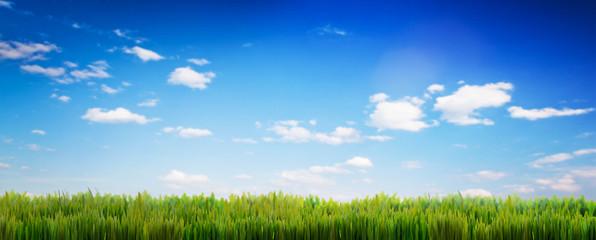 Open door on green grass