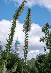 The iconic BT Tower owned by the BT Group, seen from Park Square and Park Cresent gardens Photographed during the London Open Garden Squares weekend.