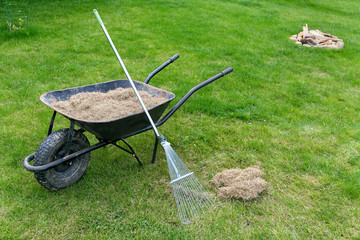 dethatching lawn with a rake moss removal in the spring garden