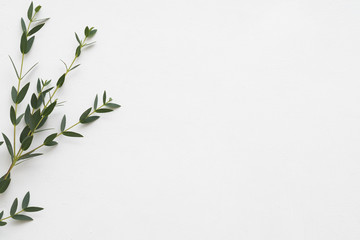 Minimalist floral composition. Eucalyptus on white background. Aroma therapy. Copy space. Fototapete
