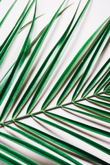 Palm leaf on pink background