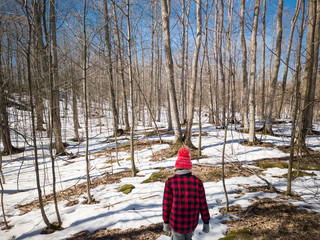 Girl in winter jacket and toque walks alone among barren winter maple trees in sugar bush