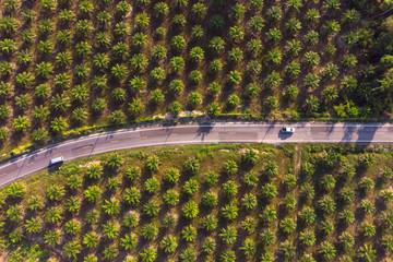 Aerial view of road in center of palm tree plantation