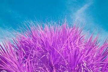 Palmetto Tree in Infrared