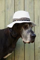 Sad dog in white hat