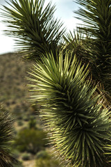 Aluminium Prints Palm tree desert cactus plant