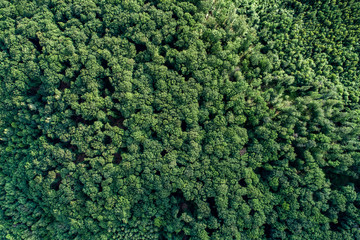 Aerial view forest. Photo from the drone.