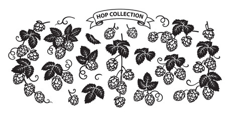 Branches of hops. Set of elements for brewery design. Hop cones with leaves icons. vector illustration isolated on white background.