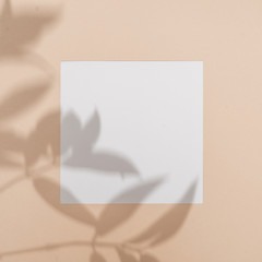 Wall Mural - Top view of green tropical leaf shadow on sand color background. Flat lay. Minimal summer concept with palm tree leaf. Creative copyspace with paper frame.