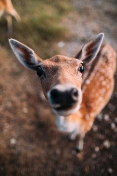 Portrait of funny deer.