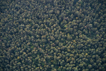 Aerial View Of The Woods.