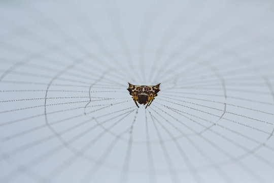 A spider in his web in morning dew.