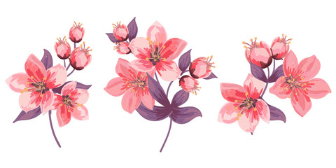 Set of blooming branches. Pink flowers and leaves. Delicate buds and blooming flowers. Isolated. Cherry Blossoms.