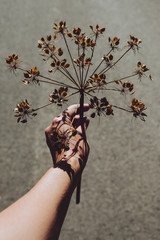 Hand holding a dry plant