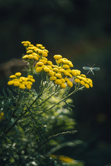 Yellow wild flowers and small flying insect