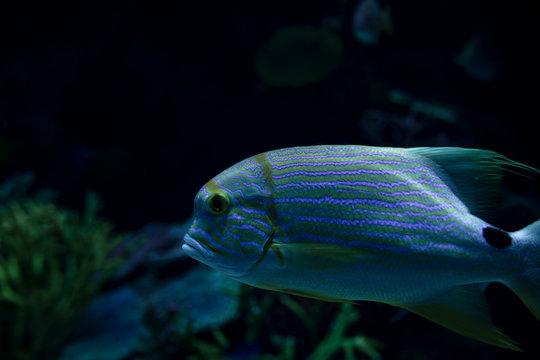 Marine Creature - Exotic Fish
