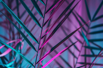 Modern palm tree lit with colorful fluorescent light indoors