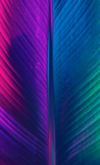 Neon lit colorful closeup palm leaf background
