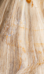 Petrified wood, close up